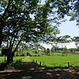 5月の鶴田沼自然の家