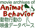 movie archives of Animal Behavior